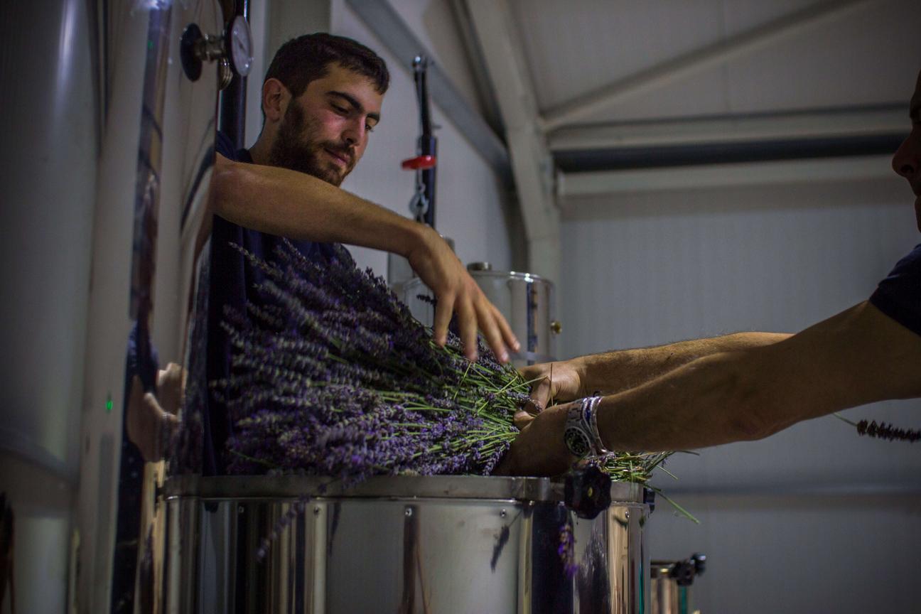Yfantia Terra | Preparation for the distillation of lavender