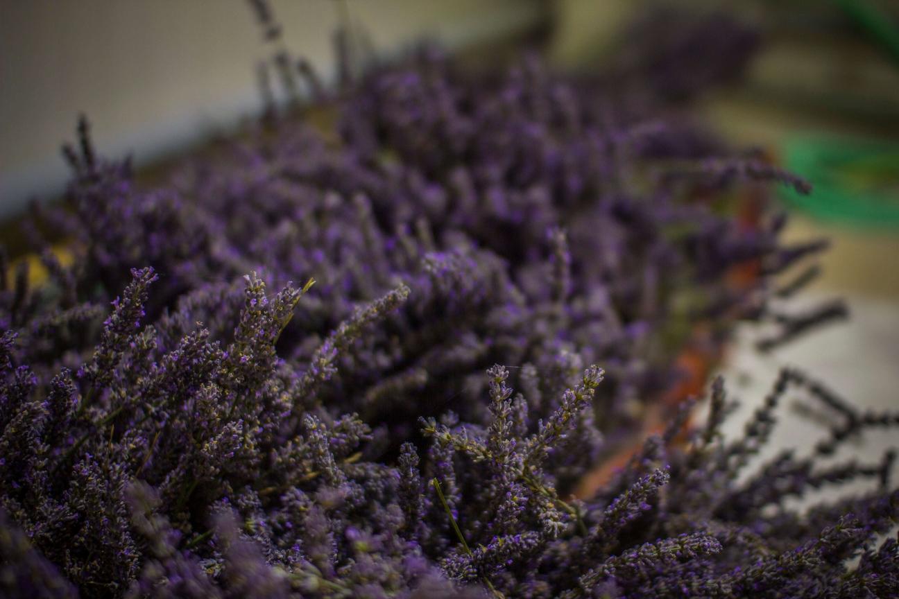 Yfantia Terra | Το φυσικό φυτό της λεβάντας