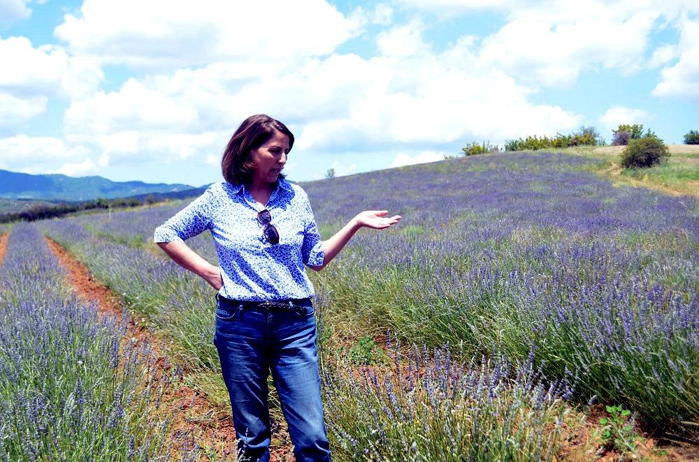 Η Κατερίνα Υφαντίδου στις καλλιέργειες λεβάντας της Yfantia Terra